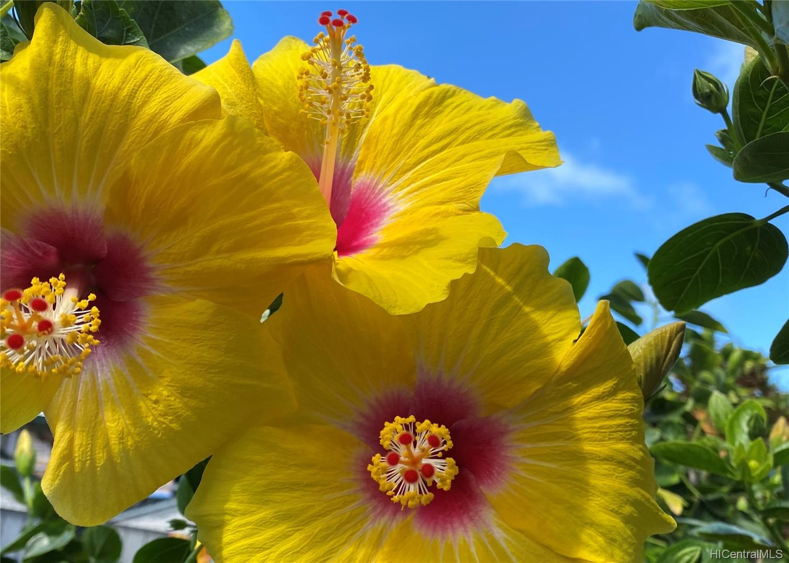 1272  Kina Street Keolu Hills, Kailua home - photo 22 of 23