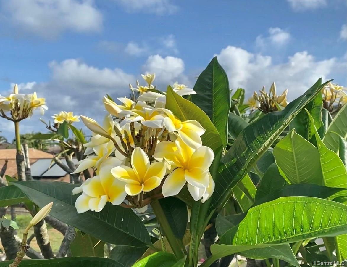 1272  Kina Street Keolu Hills, Kailua home - photo 23 of 23