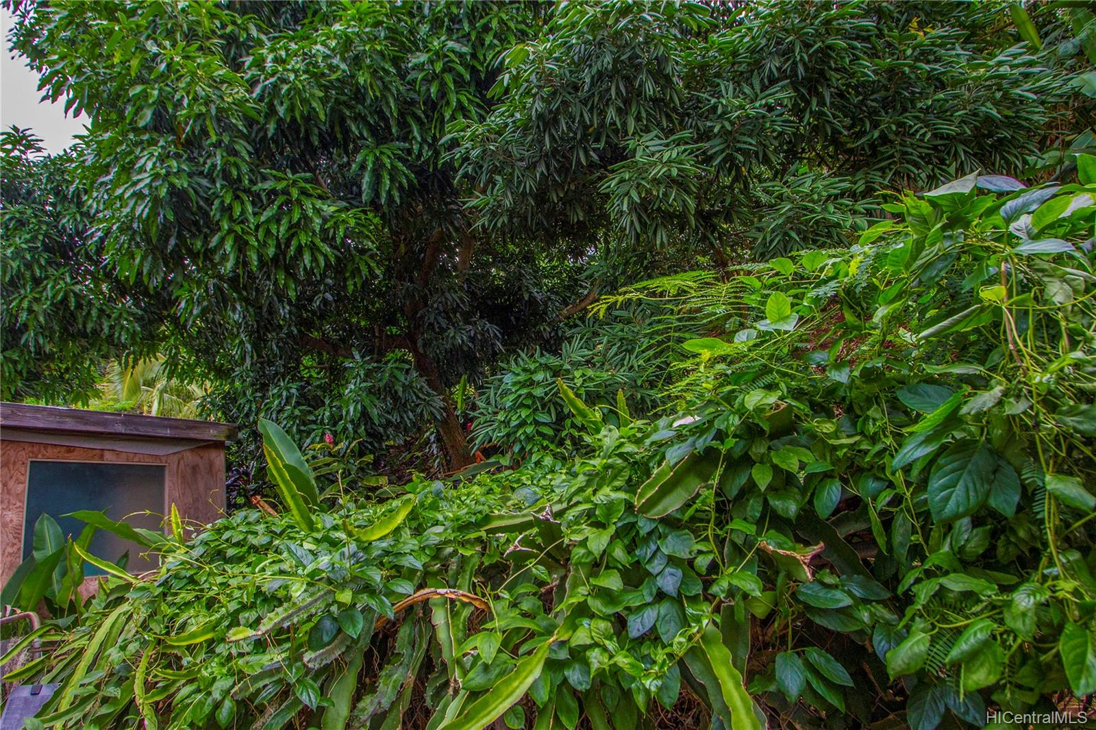2323  Amoomoo Street Pacific Palisades, PearlCity home - photo 17 of 17