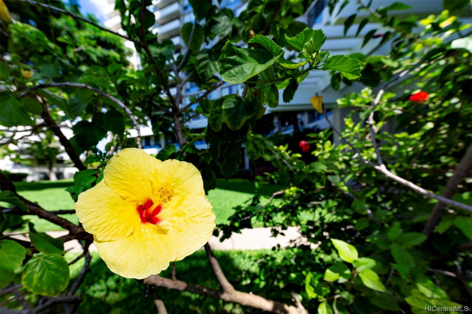 Marco Polo Apts condo # 802, Honolulu, Hawaii - photo 20 of 24