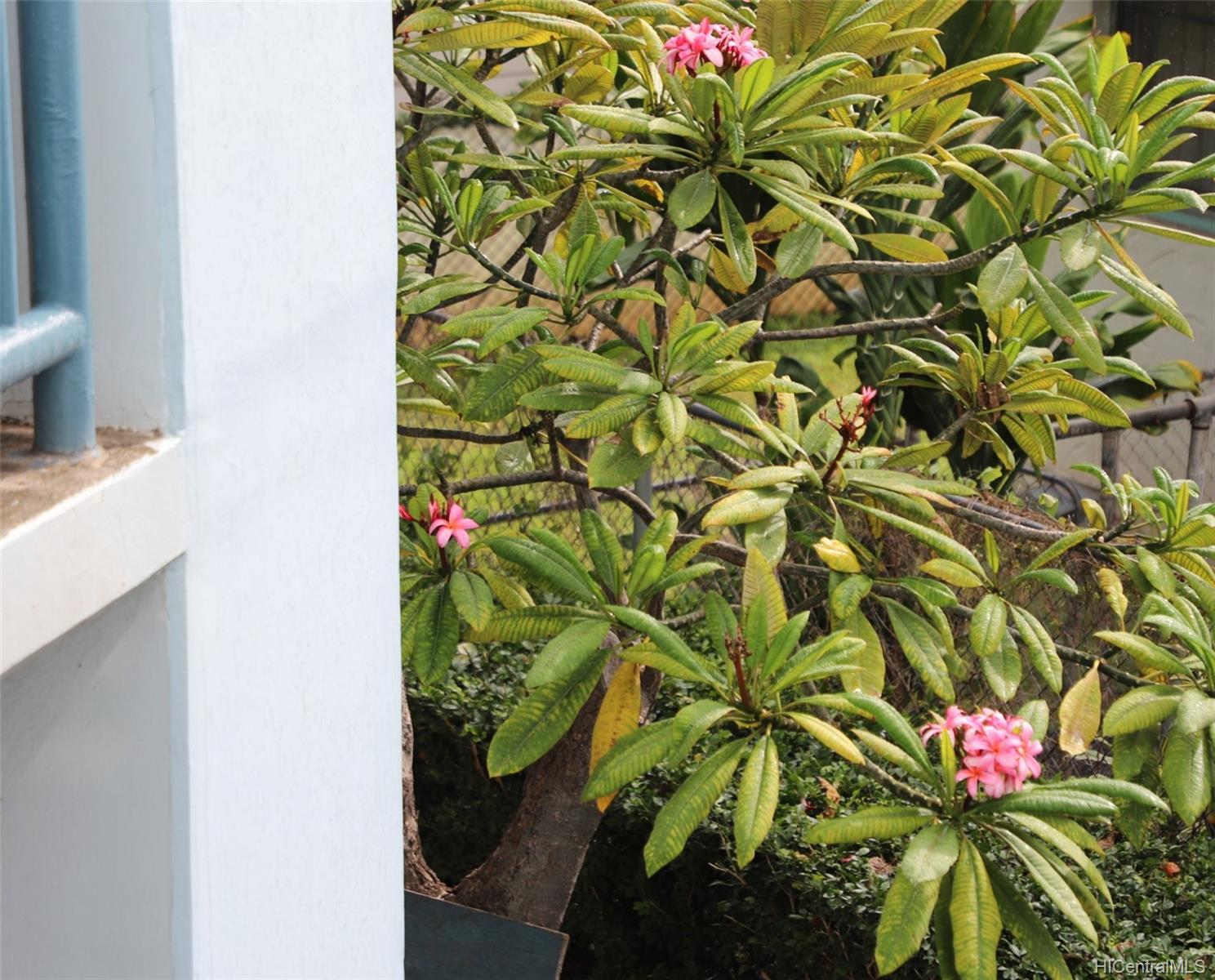 Plumeria Hale condo # 1701, Honolulu, Hawaii - photo 18 of 25
