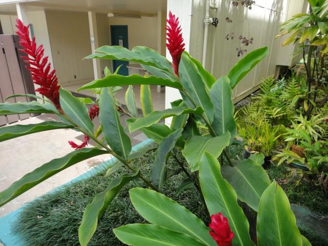 Nani Koolau condo # B104, Kaneohe, Hawaii - photo 18 of 23