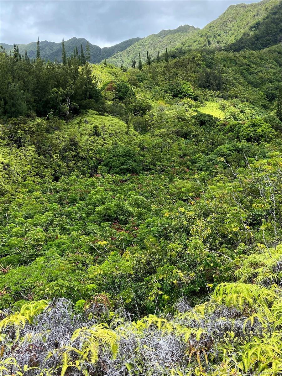 53-372M Kamehameha Hwy 6 and 11 Hauula, Hi 96717 vacant land - photo 14 of 24