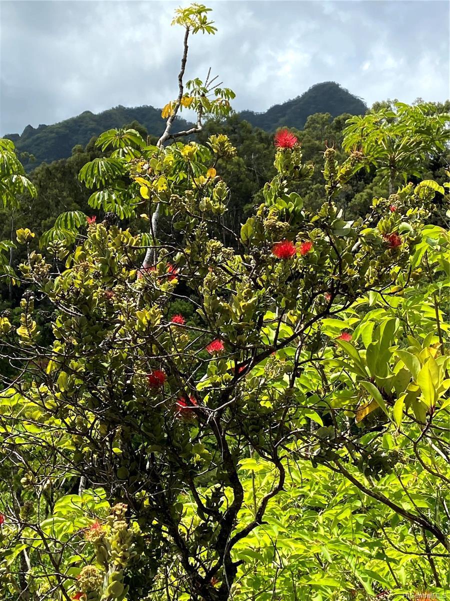 53-372M Kamehameha Hwy 6 and 11 Hauula, Hi 96717 vacant land - photo 16 of 24