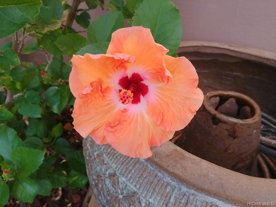 592  Poipu Drive Triangle, Hawaii Kai home - photo 18 of 23