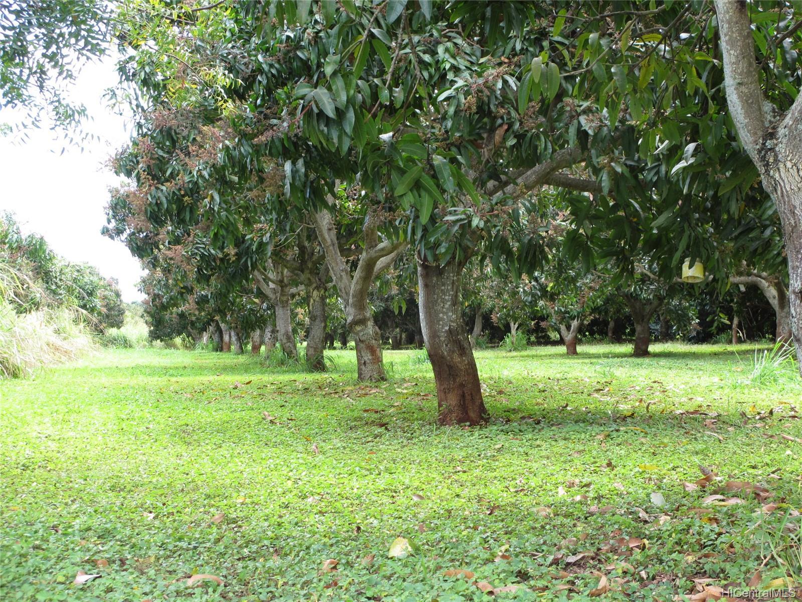 65-200  Poamoho Pl Waialua, North Shore home - photo 17 of 23