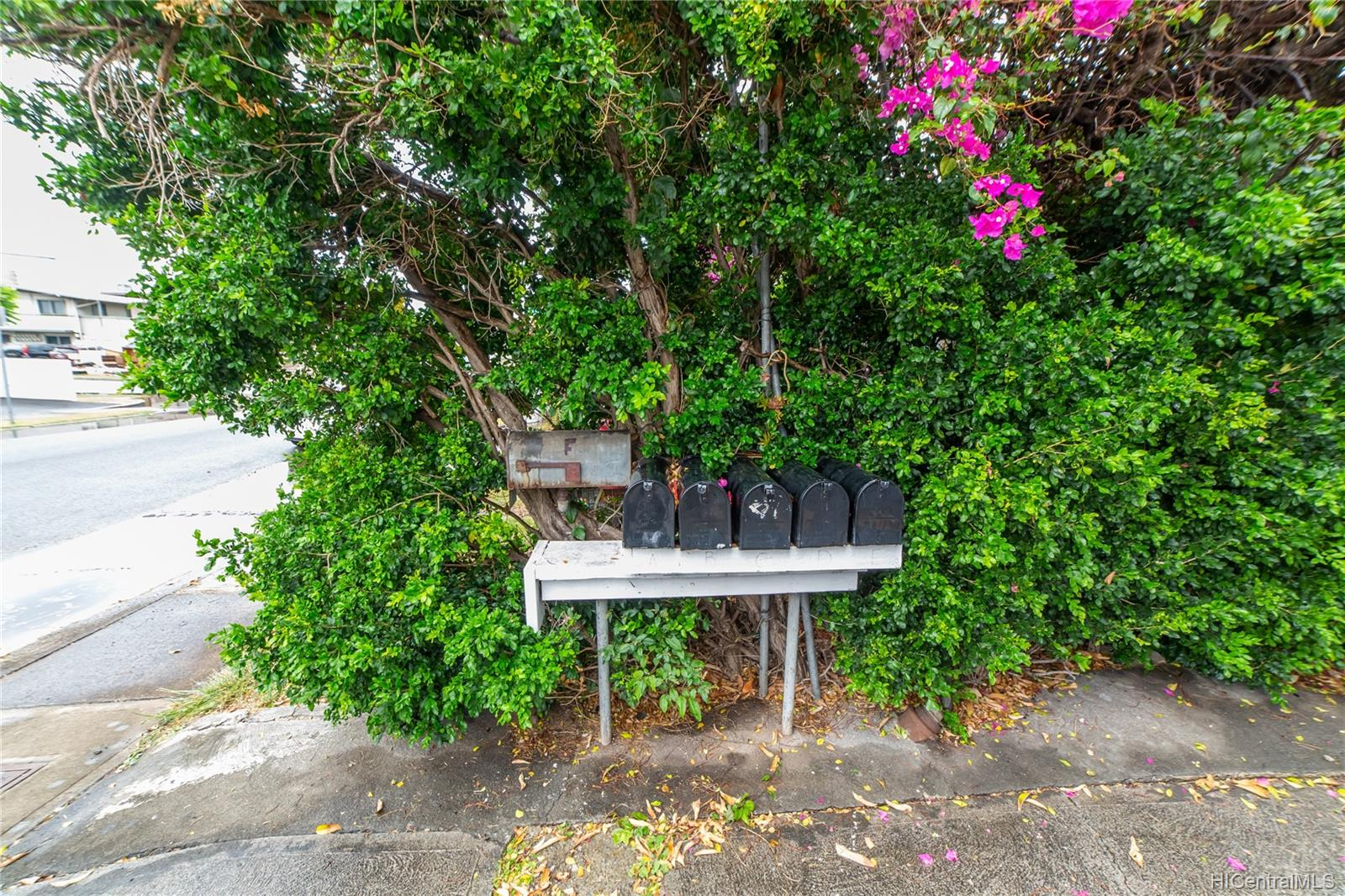 808 Makaleka Ave Honolulu - Multi-family - photo 5 of 18