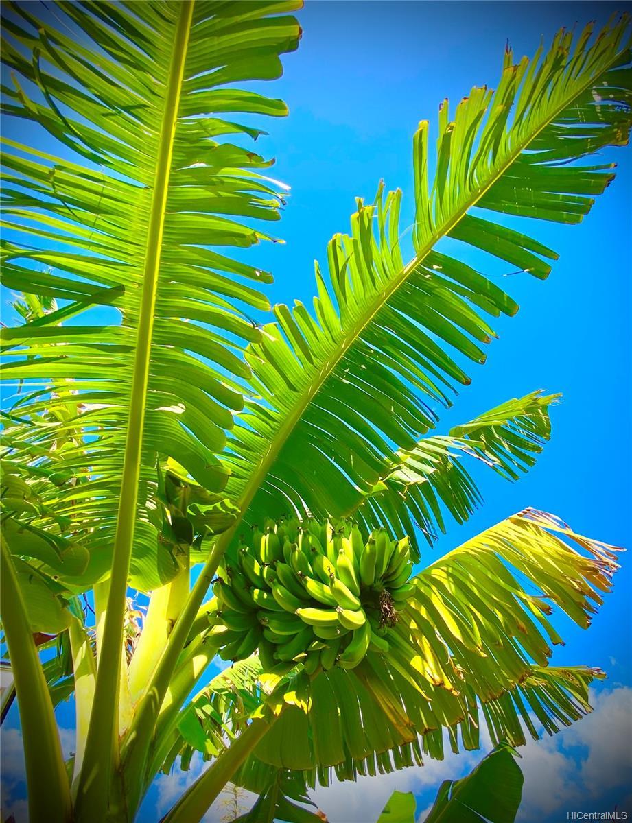 84-575  Kili Drive Makaha Oceanview Estates, Leeward home - photo 25 of 25