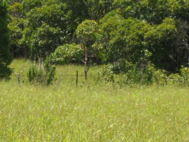 Lot 10 Awalau Rd , Hi 96708 vacant land - photo 6 of 15