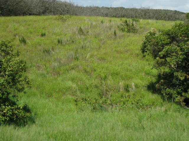 Lot 10 Awalau Rd , Hi 96708 vacant land - photo 8 of 15