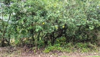 . N Ohiki St  Pahoa, Hi 96778 vacant land - photo 4 of 7