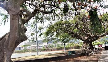 1822  Beckley St Kalihi-lower, Honolulu home - photo 19 of 20