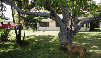 383-A  N Kainalu Dr Kalama/cnut Grov, Kailua home - photo 3 of 9