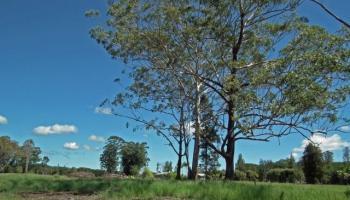 Ainaola Ainaola, Lot 1517 Dr Hilo, Hi 96720 vacant land - photo 4 of 10